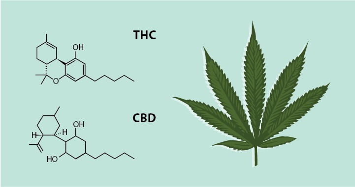 THE EVOLUTION OF THE ENDOCANNABINOID SYSTEM PART 1